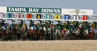Tampa Bay Downs Live Horse Race Betting